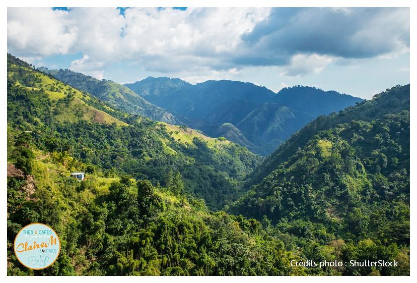 Paysage des Blue Mountains en Jamaïque